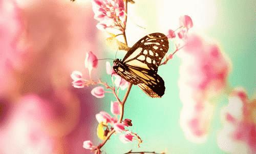破茧成蝶:努力过,坚持过,才能有收获